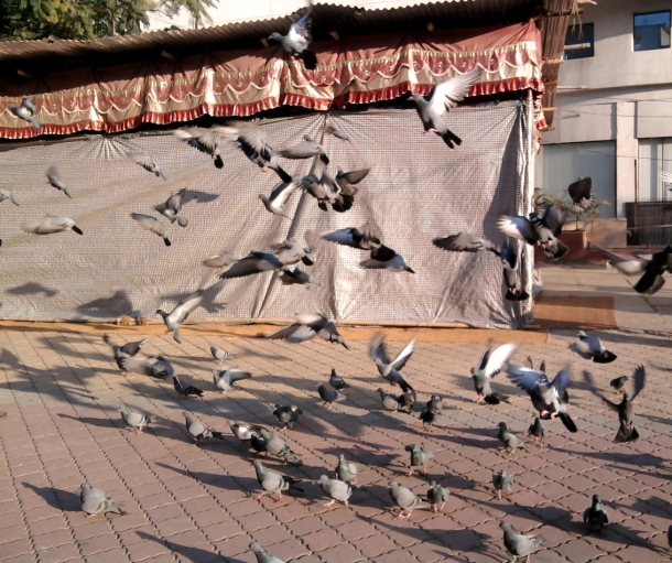 Pigeons flying away